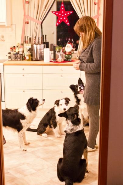 Meg og hundene jula 12